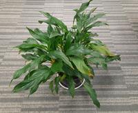 Helios2 - 三维植物