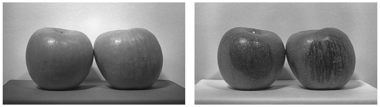 水果分类SWIR